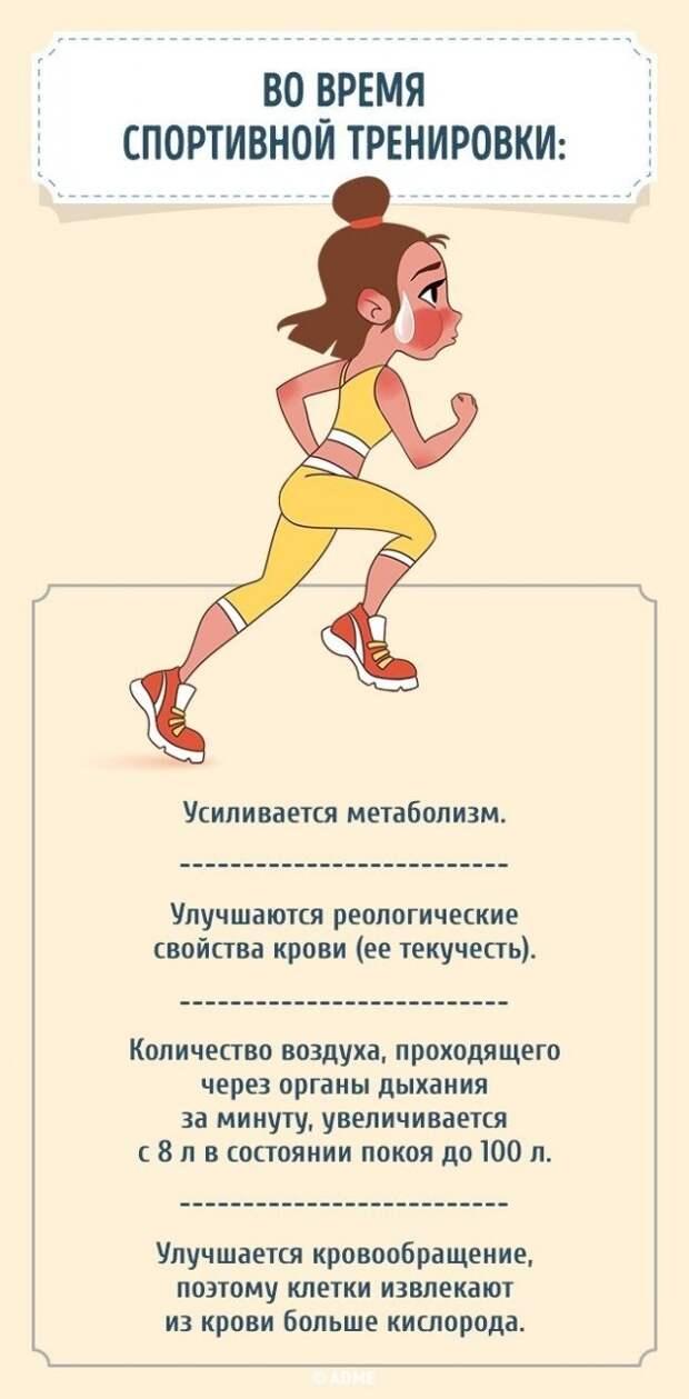 Как меняется состояние нашего организма после того, как мы начнем тренироваться