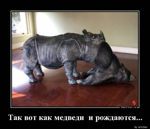 Так вот как медведи и рождаются... демотиватор, демотиваторы, жизненно, картинки, подборка, прикол, смех, юмор