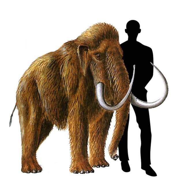 Что вы могли не знать о мамонтах
