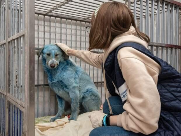 У синих собак из дзержинской промзоны появятся новые хозяева