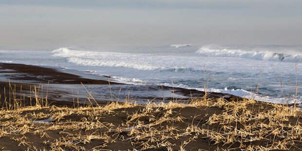 На Сахалине огромный косяк сельди выбросился на берег Охотского моря