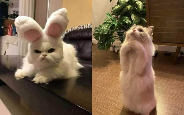 10+ забавных фото кошек, которые помогут скрасить даже самый неудачный день