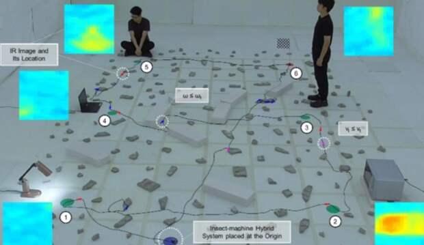 Таракана-киборга научили находить людей с помощью тепловой камеры