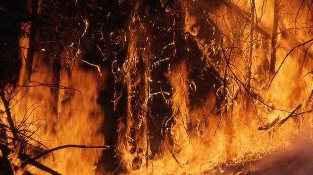Площадь лесного пожара в Тюменской области составляет более 100 га