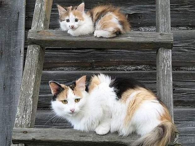 Животные и их маленькие копии