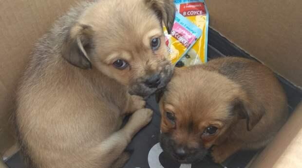 Двух щенков выбросили на улицу в крещенские морозы. Кто-то спрятал их за гаражами, чтобы бедняжек никто не нашёл