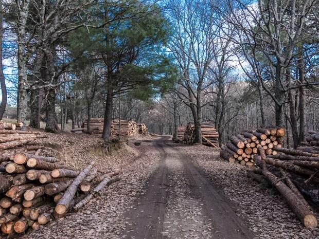 «Единая Россия» предложит поправки в Лесной кодекс