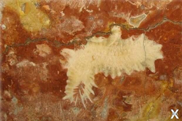 На фото: одиночный коралл