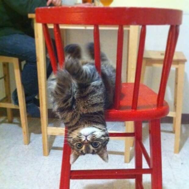Мне не плохо, мне отлично! животные, забавно, изменение сознания, кошачья мята, кошки, растения, смешно, фото