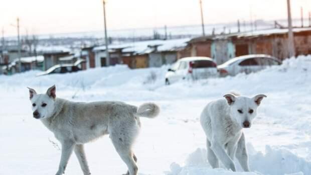 Зоозащитники заявили об убийстве собак дротиками с ядом в Усть-Куте