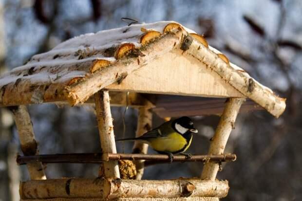 Юные читатели библиотеки на Дмитровке смастерят кормушку для птиц