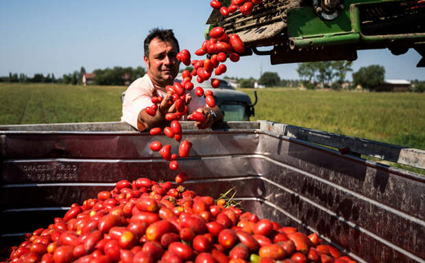 Получаем вкус свежих помидоров всю зиму. Разбираемся в консервированных томатах и томатной пасте