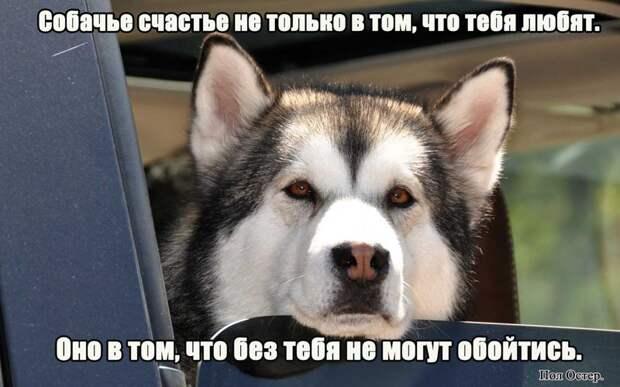 1.  афоризмы, животные, собаки