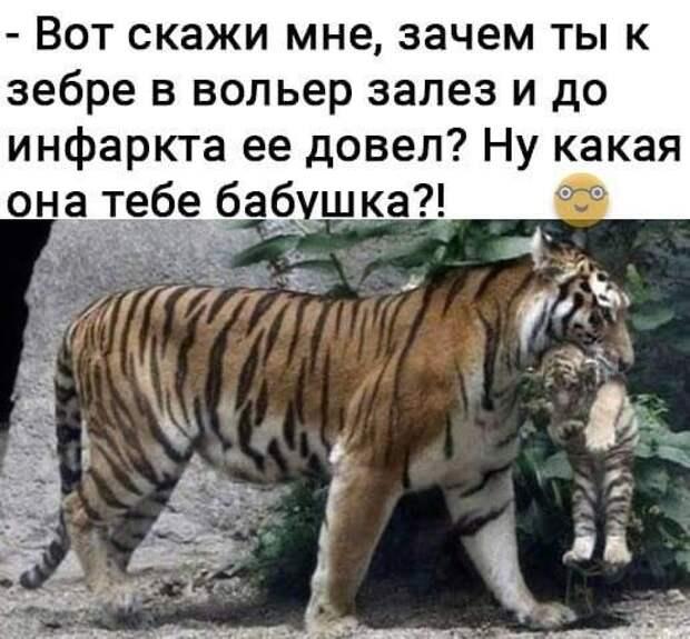 Возможно, это изображение (текст «-вот скажи мне, зачем ты K зебре в вольер залез и до инфаркта ее довел? ну какая она тебе бабушка?!»)