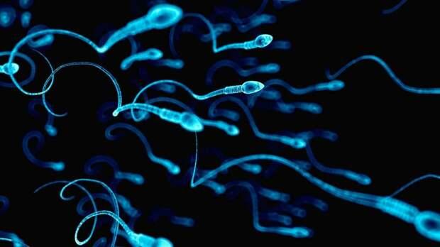Сперматозоиды / ©fishki