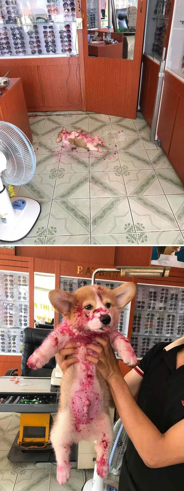 20 веселых фото собак, пропитанные позитивом