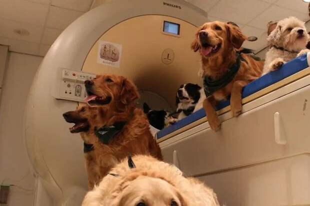 Как собаки понимают человеческую речь на самом деле