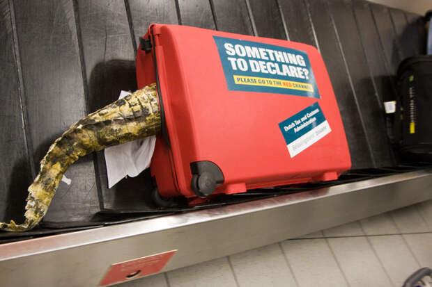 7. Да, это реклама, призывающая декларировать вещи, однако фотографии выше уже доказали, что незаметно перевезти через границу ежедневно пытаются много незаконных объектов аэропорт, багаж, путешественники, фото, юмор