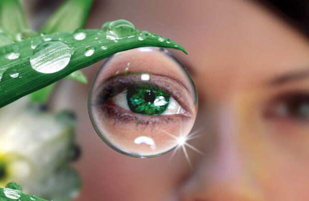 Лечение глаз травами: без химии можно улучшить зрение!