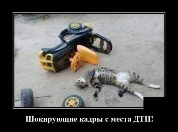 Демотиватор про кота и аварию