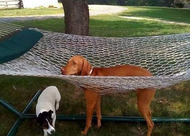 Собаки, которые ведут себя как милые дурачки
