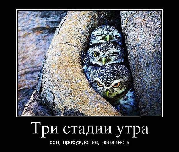 Веселые демотиваторы для улыбок (11 фото)