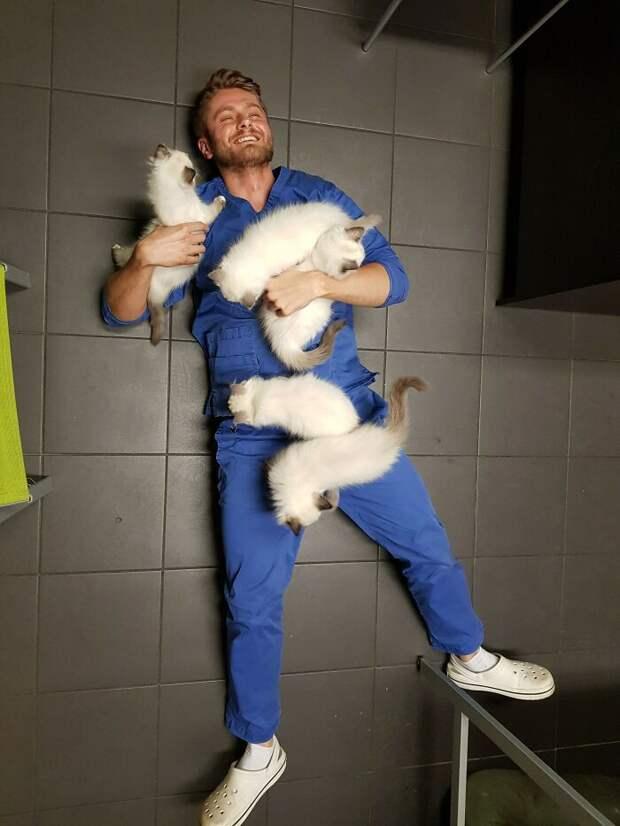 Преимущества работы ветеринаром.