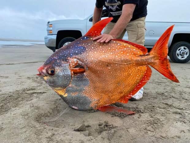 """Гигантскую """"теплокровную"""" рыбу выловили в США"""