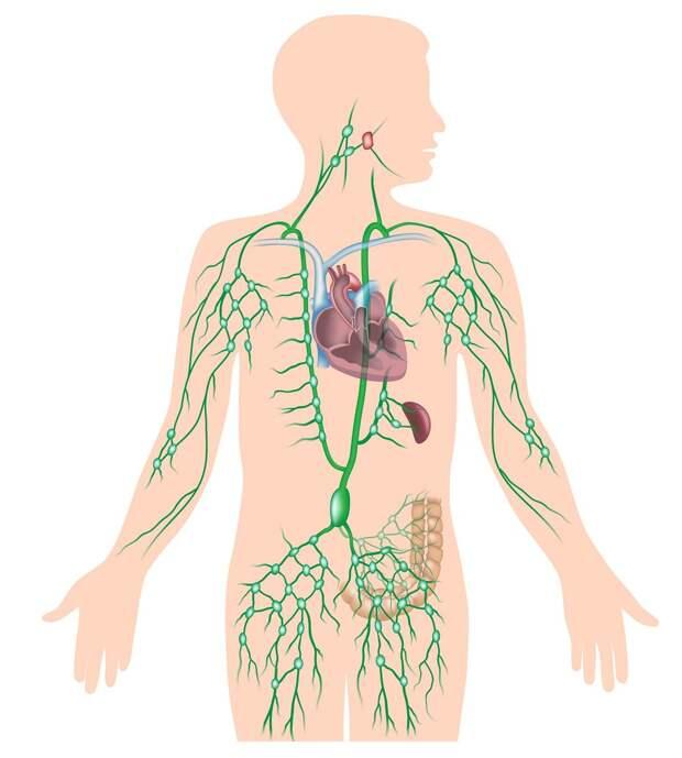 Как формируется и укрепляется иммунитет