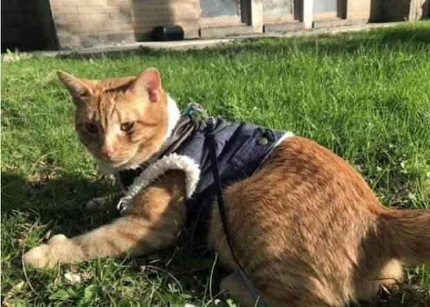 Котенок оказался в приюте из-за своей особенности