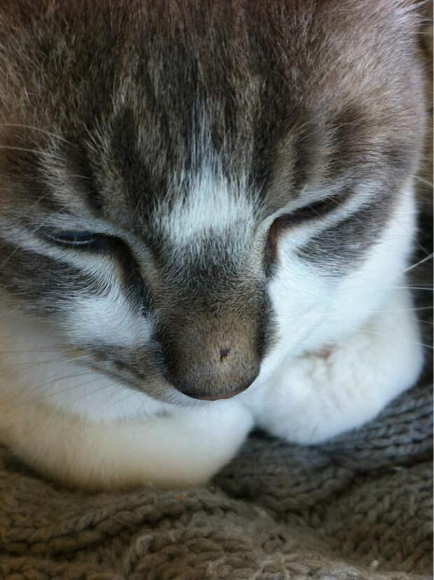 28. Любопытный носик животные, кот, оса, пчела, реакция, ужаление, укус
