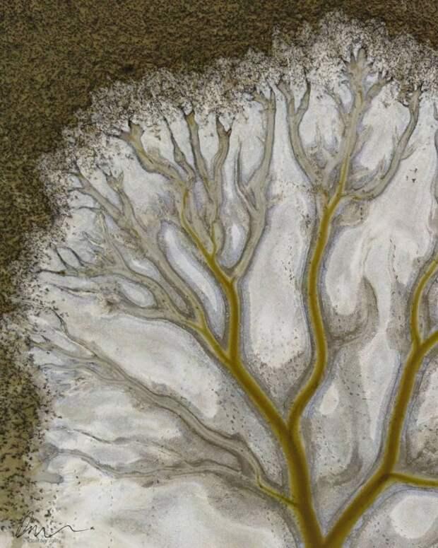 """""""Дерево жизни"""" на вышедшем из берегов озере Какора"""