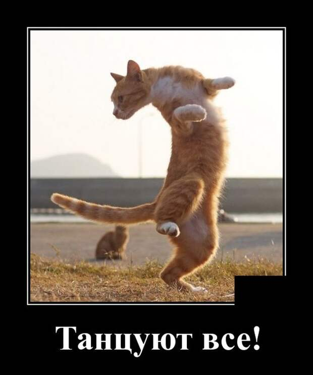 Демотиватор о коте