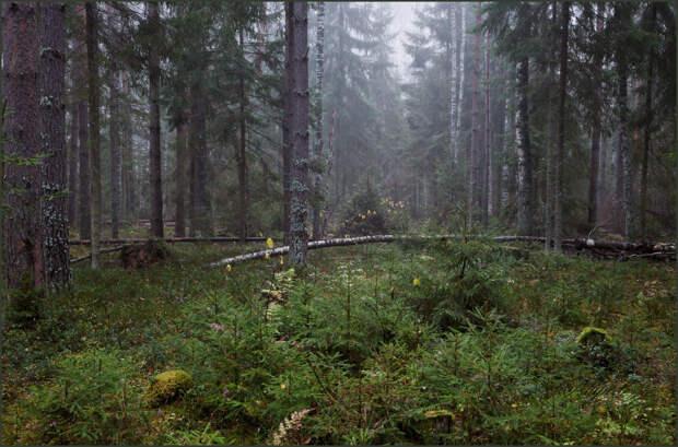 Тверскую область ждёт очередное увеличение лесного фонда