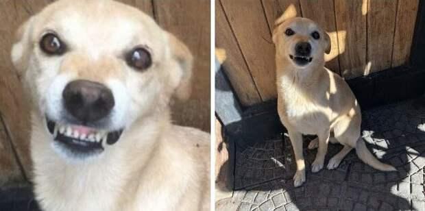 30 «чистокровных» собак, которые очень удивили своих хозяев, когда выросли