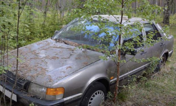 Нашли старые автомобили в лесу