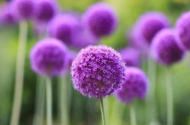 Красивые композиции из луковичных цветов