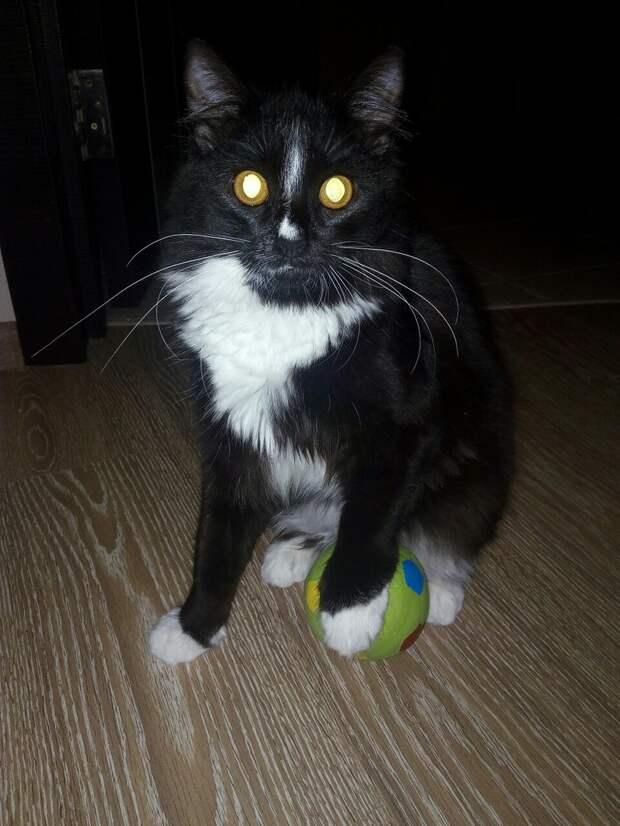 Гулящая кошка спрятала котят на веранде детсада! Самому «дохленькому» особенно повезло…