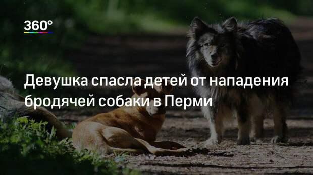 Девушка спасла детей от нападения бродячей собаки в Перми