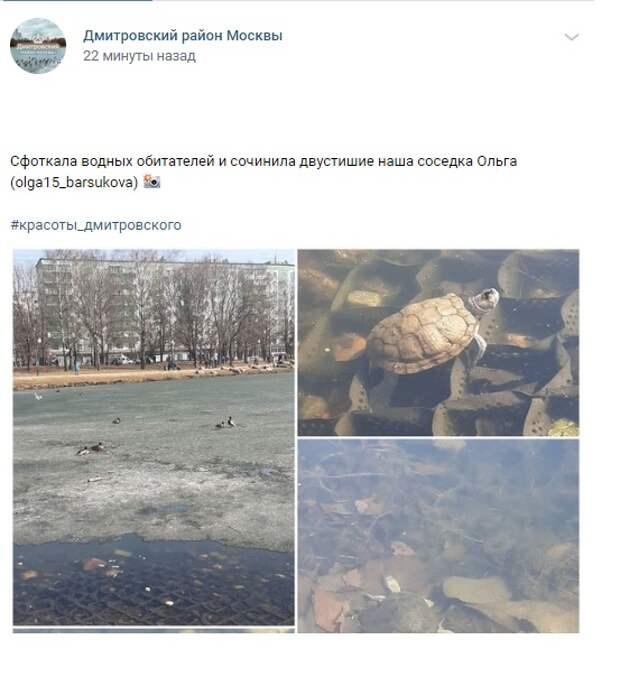 Фото дня: в пруду парка «Ангарские пруды» живут черепахи
