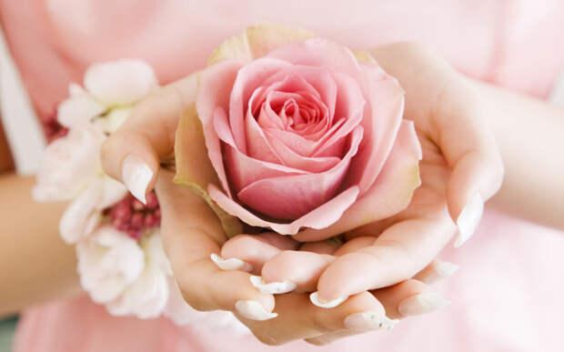 cvetok-ruki-roza