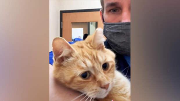 Ветеринар забрал домой трехлапого кота, которого хотели усыпить