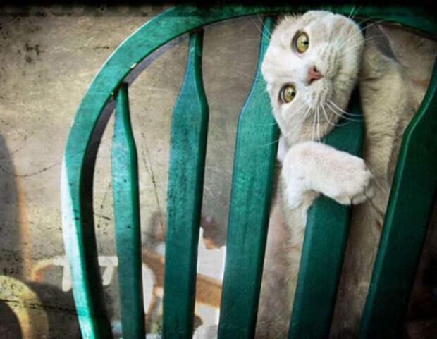 19 кошек, попавших в неловкое положение
