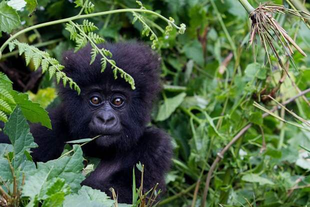 Лучшие фотографии животных со всего мира за неделю