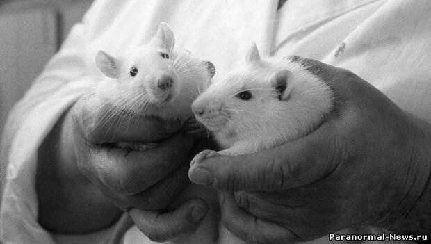 """Сибирские ученые испытали на себе """"таблетки от старости"""""""
