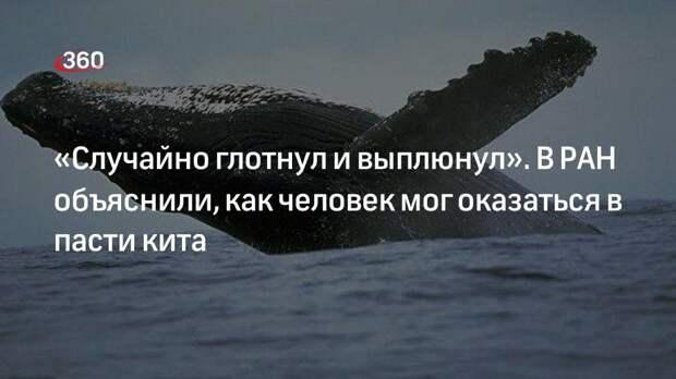 «Случайно глотнул и выплюнул». В РАН объяснили, как человек мог оказаться в пасти кита