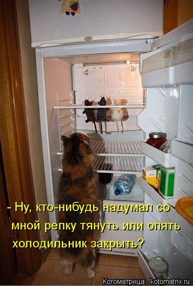 Котоматрица: - Ну, кто-нибудь надумал со мной репку тянуть или опять холодильник закрыть?