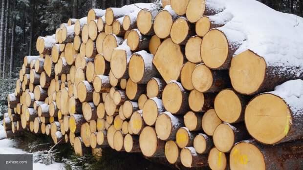 Заморозку экспорта древесины в архангельской думе назвали спорной мерой