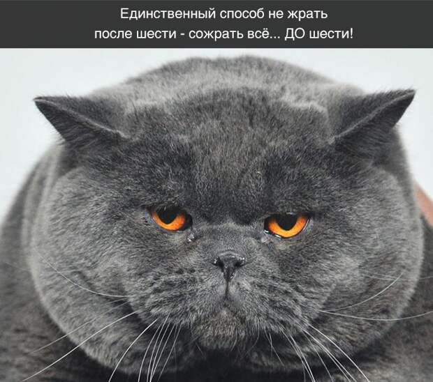 Подборка классных демотиваторов № 156