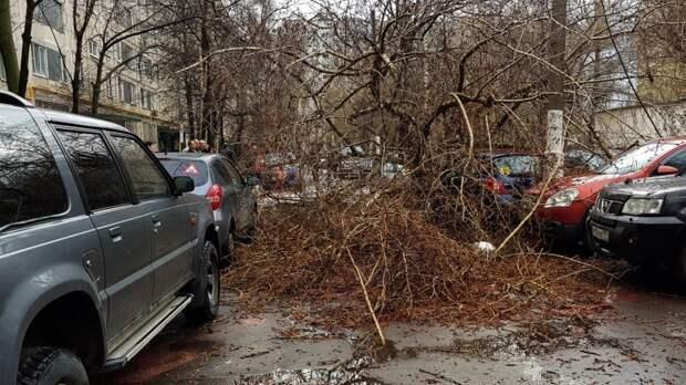 Стало известно о состоянии двух пострадавших из-за ураганного ветра в Москве